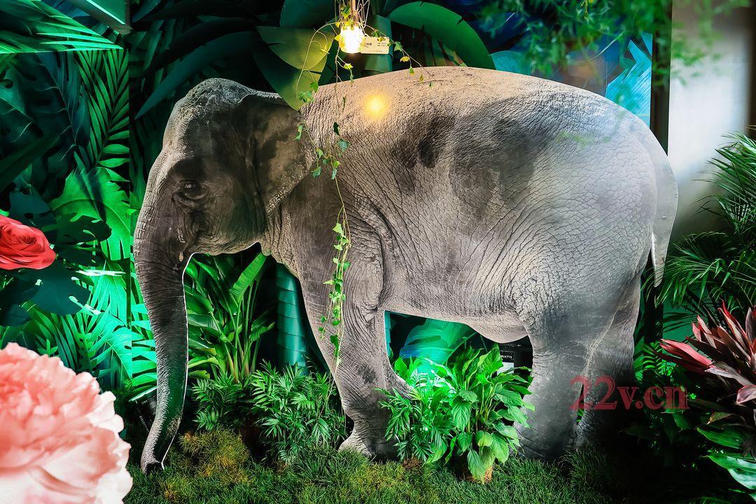 热带雨林主题活动策划方案推荐